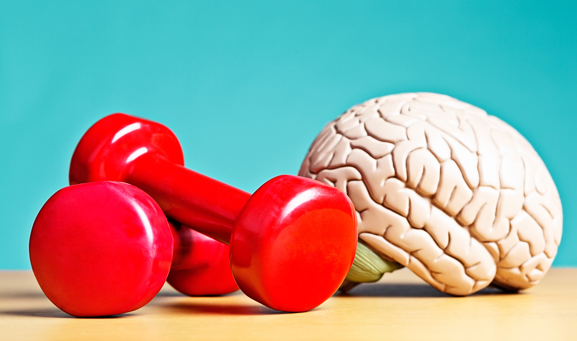 A model brain sits next to exercise weights. Metaphor for heavyweight intellects, or a reminder that exercise helps your circulation, so as well as keeping your body fit, it also keeps you mentally active. Double bonus!